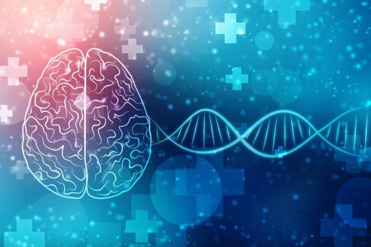 Human Brain 2d Illustration, Digital Illustration Of Human Brain